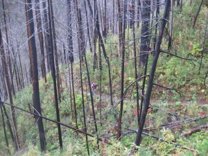 Secondary succession following a fire a couple of years ago